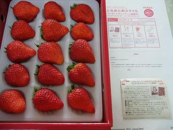 20130317 JA全農とちぎ プレミアムとちおとめ.JPG