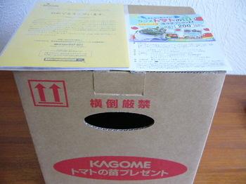 20130530 コープさっぽろ×カゴメ 凛々子苗4本.JPG