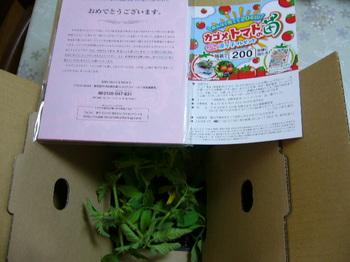 20150523 コープさっぽろ×カゴメ 凜々子苗4本.JPG
